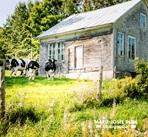 grange et vaches